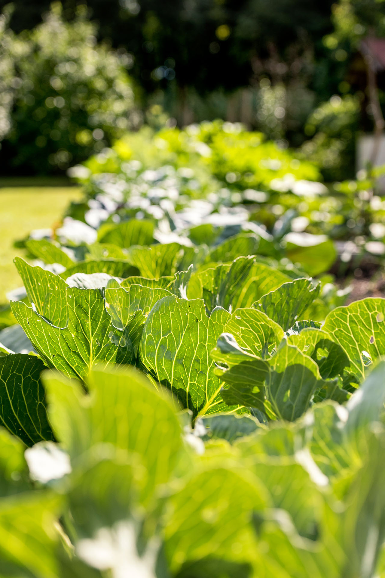 Organic vegetable gardens -  The Organic Vegetable Garden Is Furthermore Home To Nut Trees As Well As Numerous Vegetable Patches Growing Ancient Types Of Tomatoes Kohlrabi